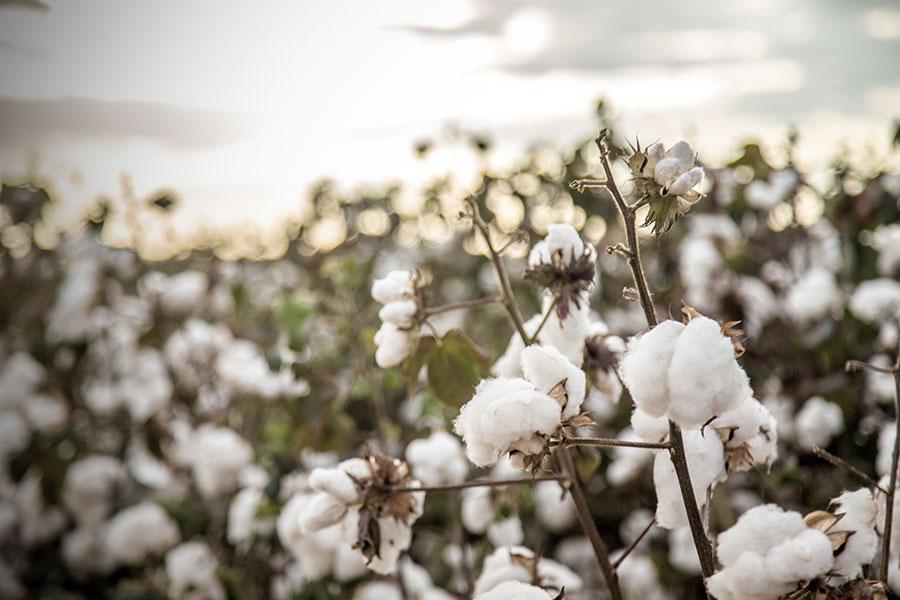 Bio-Naturfasern, wie z.B. Biobaumwolle, gelten als besonders nachhaltig